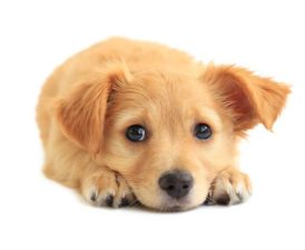 The Best Dog Food For Puppies