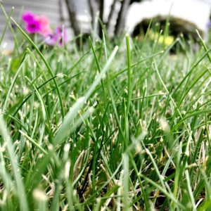 The Best Lawn Care Services
