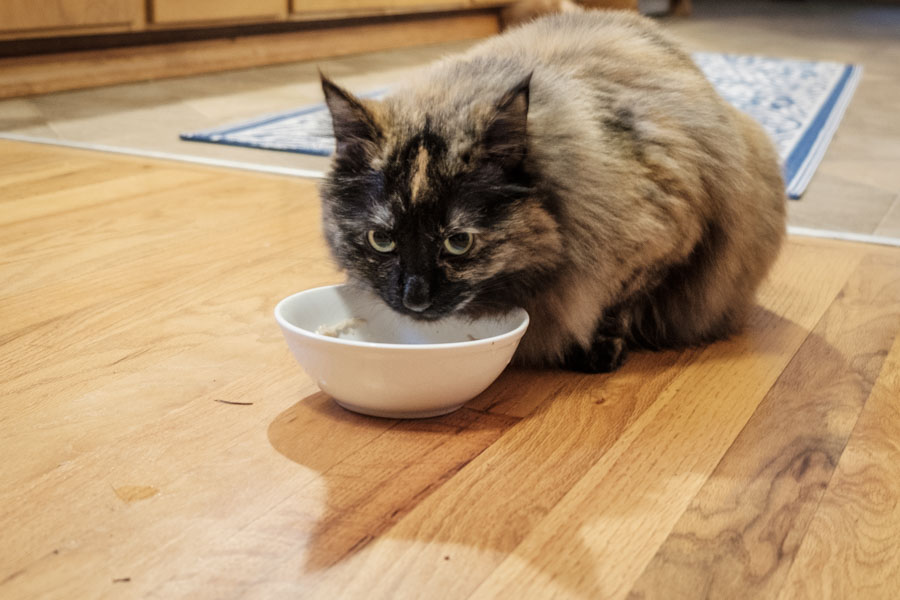 737a78f80b The 9 Best Cat Foods for 2019