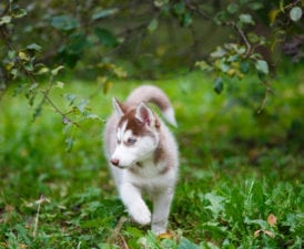 Ask the Experts: Is Pet Insurance Worth It?