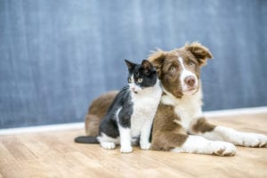 The Best Joint Supplements for Pets