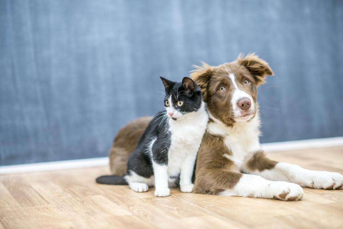 Guide to Pet Boarding Services | Reviews com