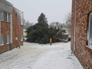 Downed Tree in Bomb Cyclone