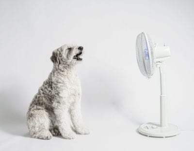Keeping Your Dog Safe In Hot Weather
