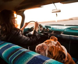 Best Places to Visit With Your Dog