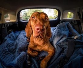 Training Advice for Traveling With Your Dog